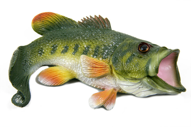 Large Mouth Bass. A plastic model of a large mouth bass fish isolated on white