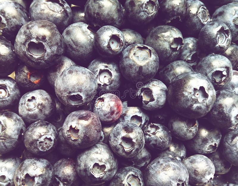 Large number of blueberries gathered in summer. Background from a large number of ripe dark blue round blueberries gathered in summer stock images