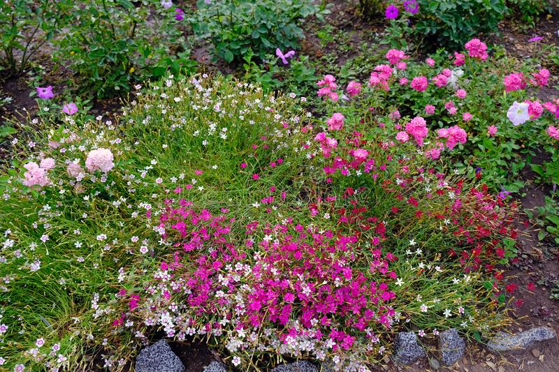 A large number of different flowers in the flowerbed in the park. Flower bed decoration in the botanical garden. Plants of different types and flowers of stock image