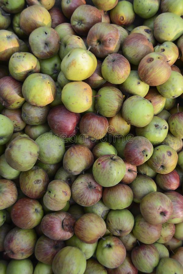 A large number of organic green red apples. Healthy food. Fruits. Wallpaper and patern stock photography