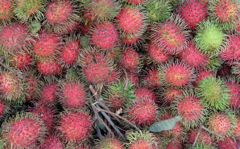A large number of rambutans as a background. Unusual tropical fruits royalty free stock photography
