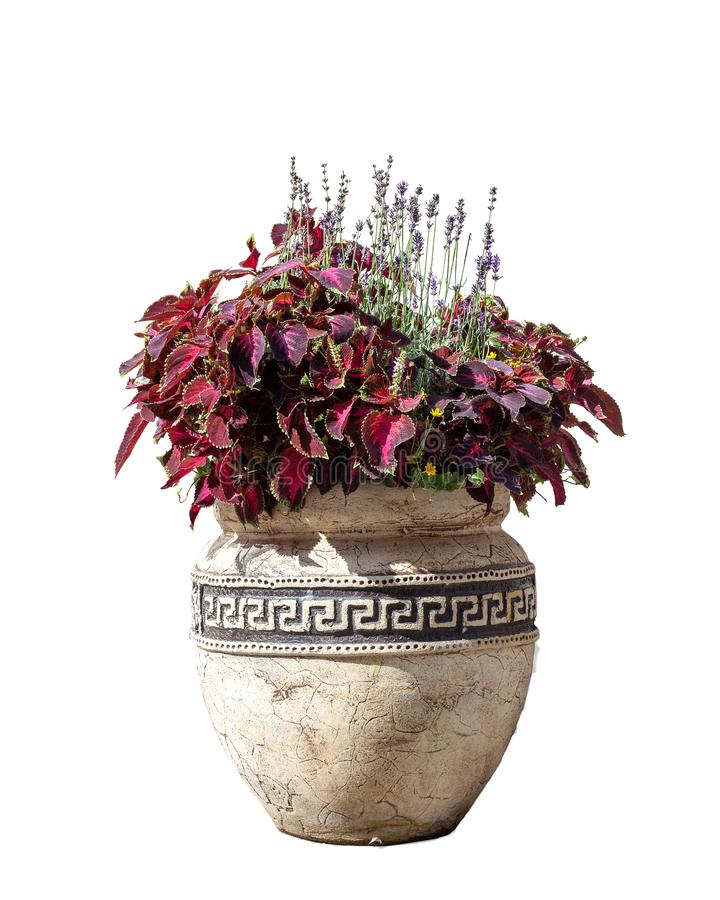 Large old ceramic vase with various flowers isolated on white background stock photos