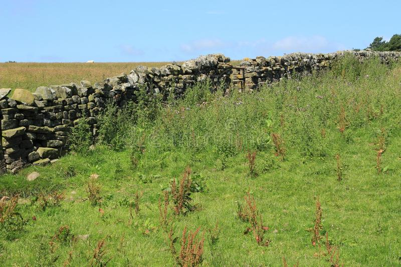 A large dry stone wall in England in the summer. Blue sky with clouds, trees and an old large dry stone wall at the countryside in England in the summer stock photos