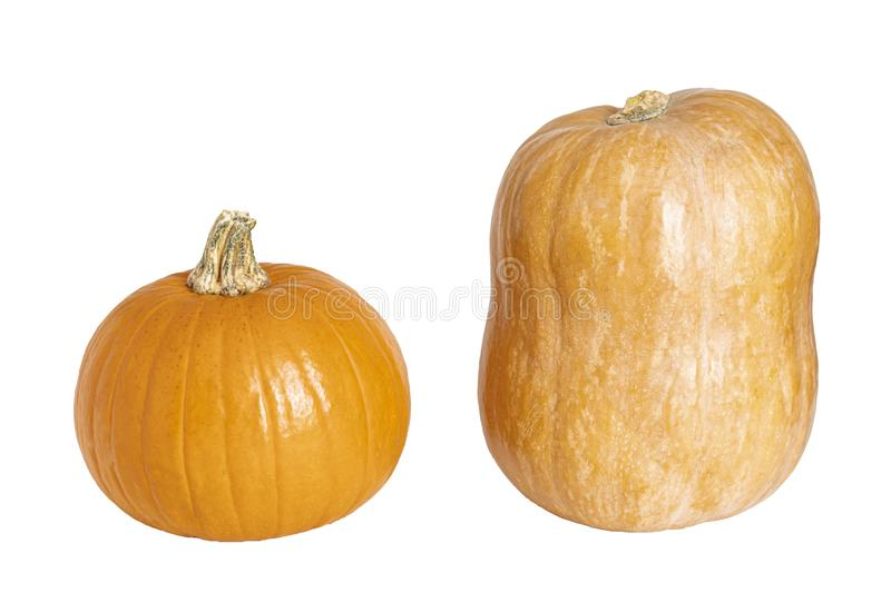 Large orange pumpkin and an elongated isolated on a white background royalty free stock images