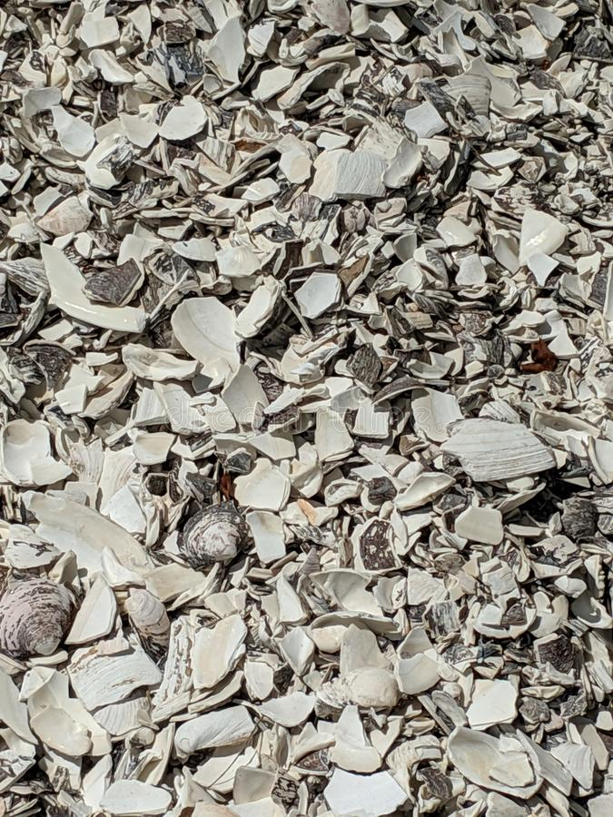 Crushed shells on the ground stock photo
