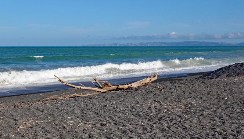 A large piece of driftwood on a deserted beach in New Zealand stock image