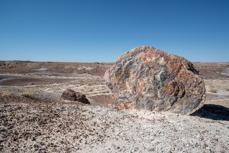 Large piece of petrified wood split that has now turned the prehistroic log into crystal stone minerals at the Petrified Forest. National Park in Arizona stock image