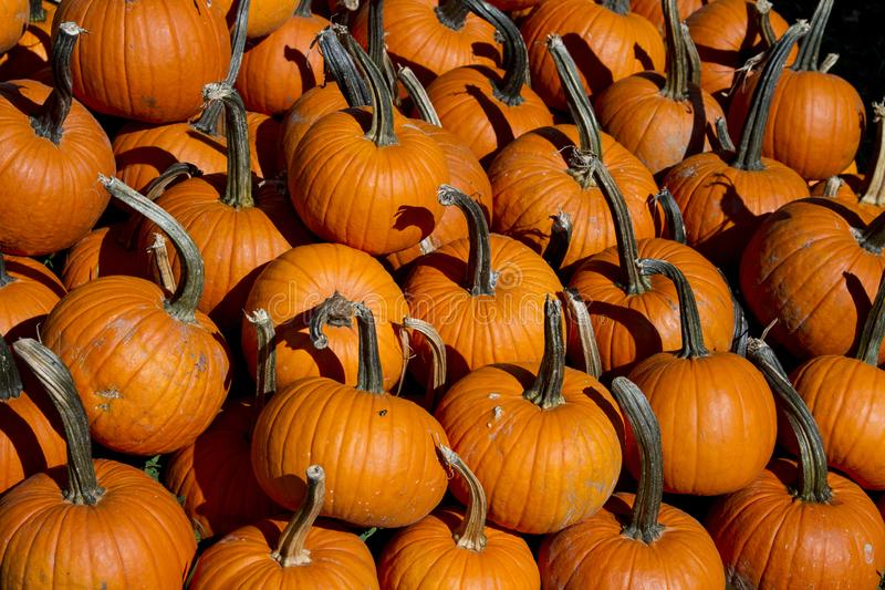 Large pile of carving pumpkins stock photo
