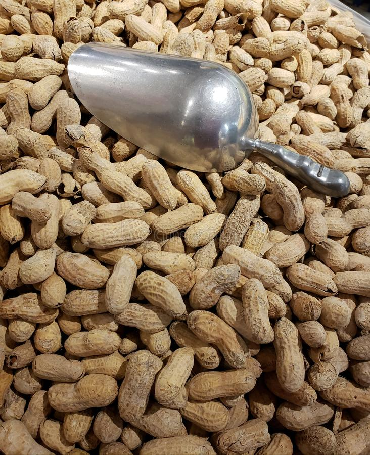 A large pile of peanuts with a silver, metal scoop stock photos