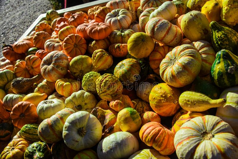 Pumpkins and Gourds in a Pile royalty free stock photos