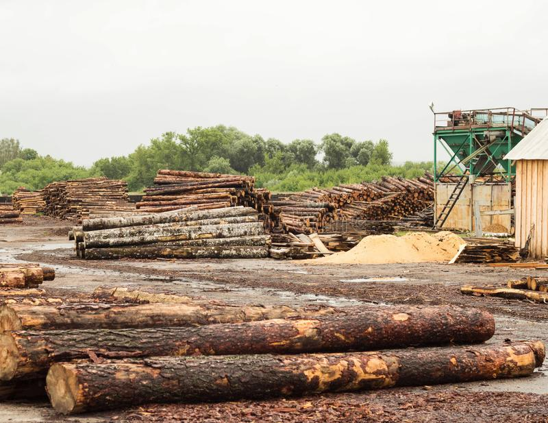A large pile of timber logs at a woodworking plant, a sawmill, timber royalty free stock images