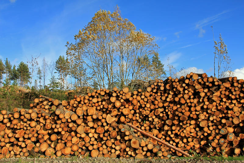 Large Pile of Wooden Logs stock image