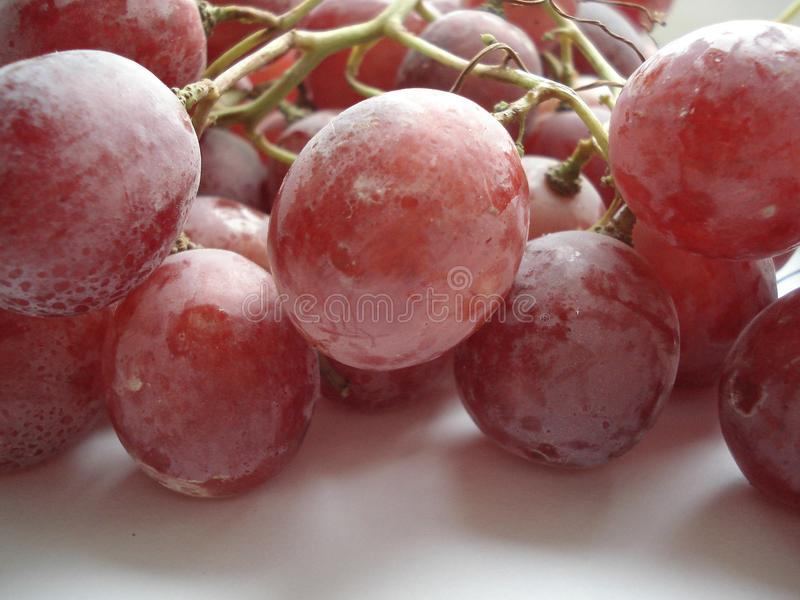 Wet brush of large pink grapes stock image