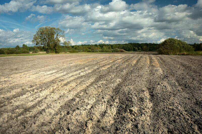 Large plowed field, horizon and clouds on the blue sky in Zarzecze, Poland royalty free stock photo