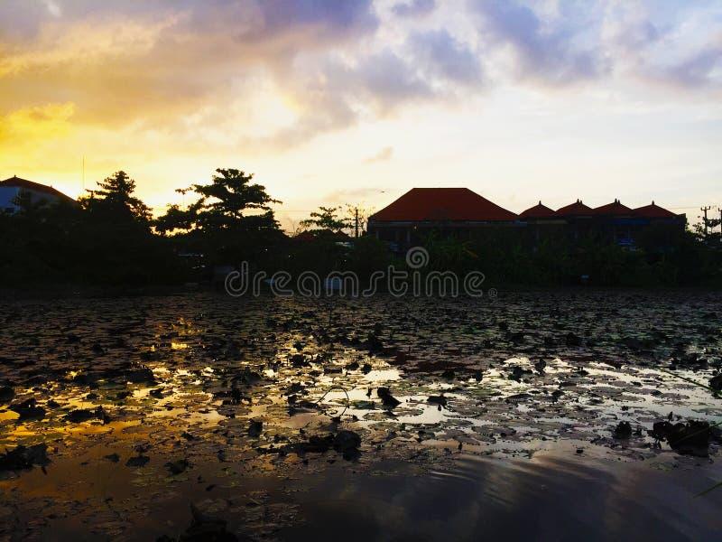 Large pond lotus with sunset view at Denpasar, Bali, Indonesia. Scenic view of large pond lotus with sunset view at Denpasar, Bali, Indonesia stock images