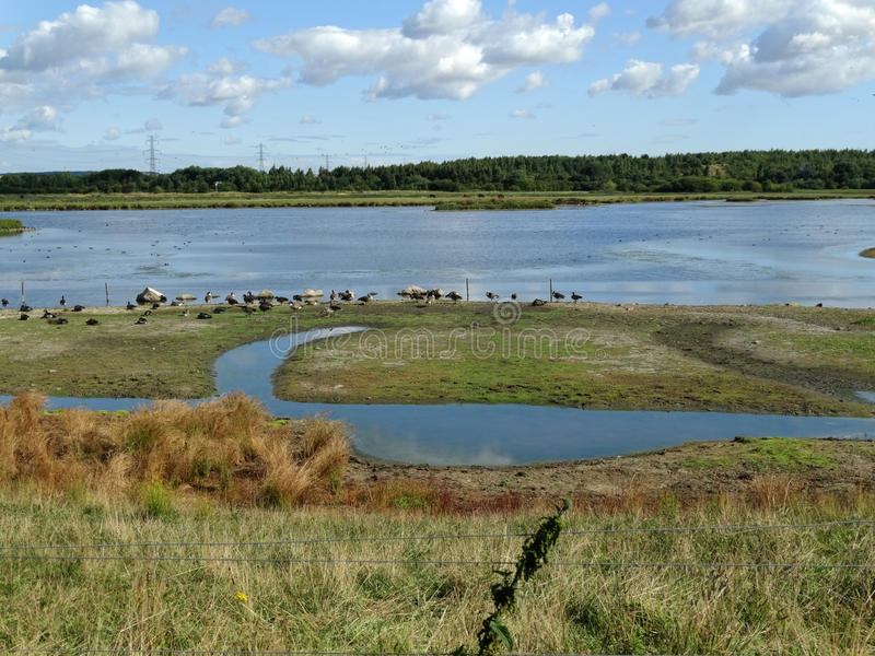 Large Pond at Old Moor royalty free stock photo