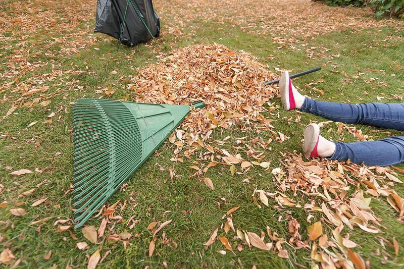 Woman is exhausted from raking leaves. stock image