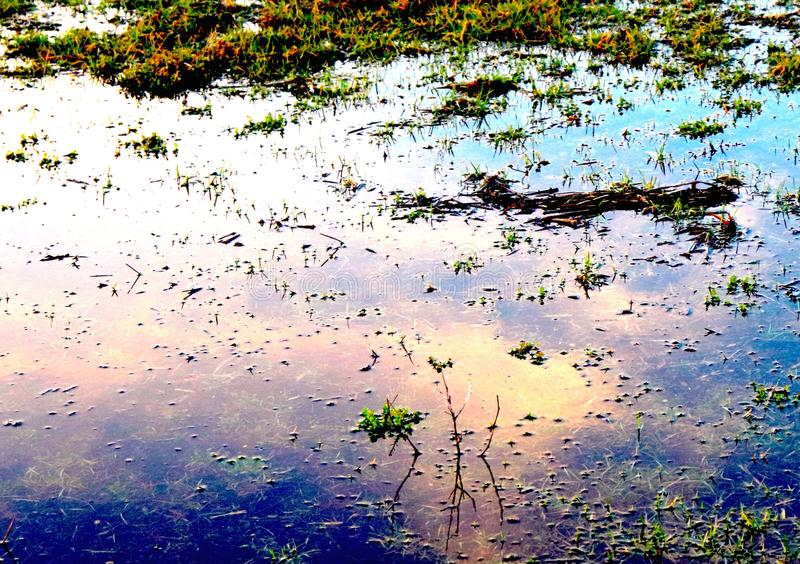 Puddle on Saturated Grass Reflects Sky and Sunshine. Large puddle on grassy property reflects the sky above and the yellow sunshine. The sun and the blue of the stock image