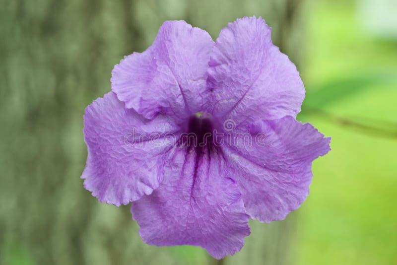 Large purple flower stock photography