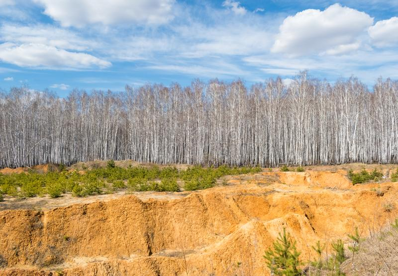 Large sand quarry in the forest royalty free stock photography