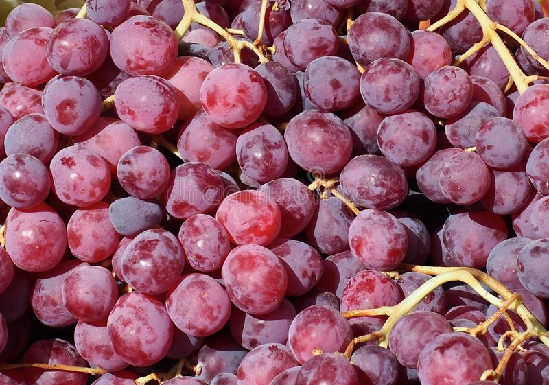 Grapes For Sale In Loule Portugal. Large red grapes for sale at the market in Loule Portugal stock image