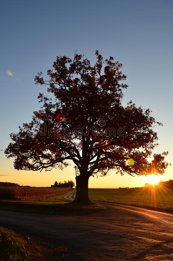 Sunrise behind Silhouette of Large old oak tree along a winding drive on a farm in Autumn. Large red old oak tree in Autumn along a winding drive on a farm stock images