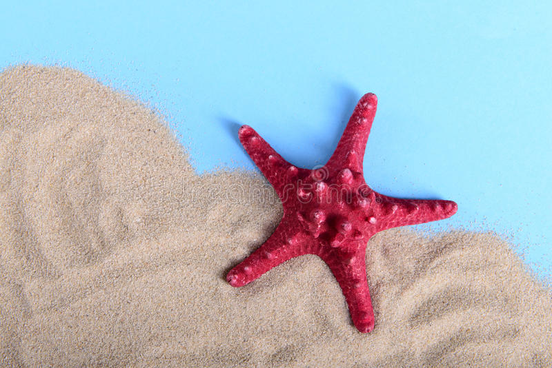 Large red starfish on sand stock images