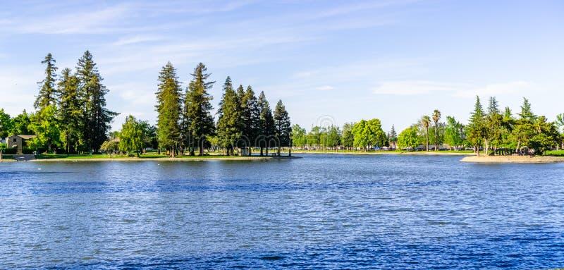 Large redwood trees on the shoreline of Lake Ellis, Marysville, Yuba County, California stock image