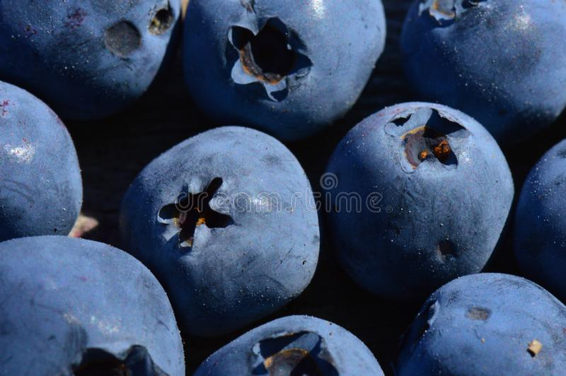 Large ripe blueberry berries harvest of summer swamp fresh fragrant fruit royalty free stock photo