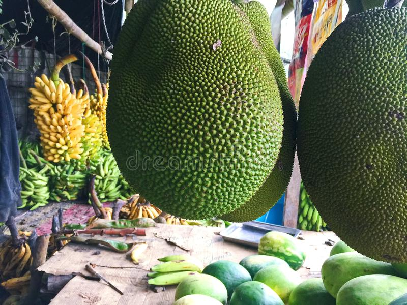 Large Ripe Jackfruit Hanging at a Fruit Market. Green tropical jackfruit for sale at a market with bundles of bananas in the background royalty free stock image