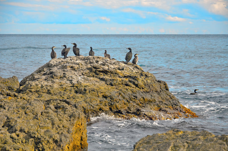 Download A Large Rock With A Flock Of Birds On The Background Of The Sea In Crimea Stock Photo - Image: 56150342