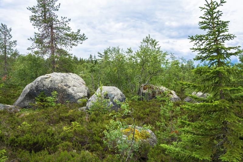 . Large rocks boulders in the nature reserve of mount Vottovaara, Karelia. Large stones boulders in the nature reserve of mount Vottovaara, Karelia, Russia royalty free stock image