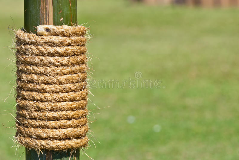Download Large Rope On Bamboo Tree With Green Grass Stock Image - Image: 28408847