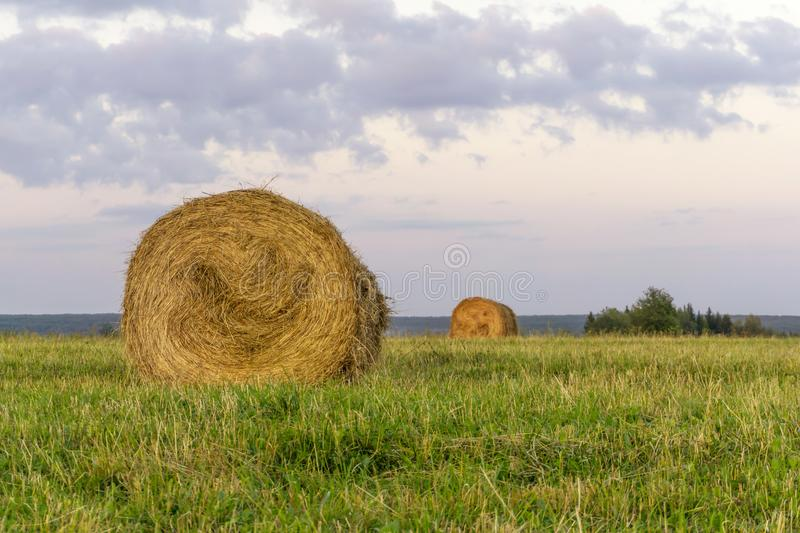 Round bales of hay on a beveled meadow. Large round bales of hay lays on a beveled meadow after rain stock images