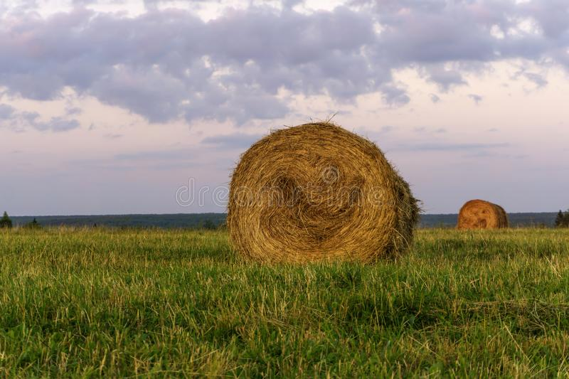 Round bales of hay on a beveled meadow. Large round bales of hay lays on a beveled meadow royalty free stock image