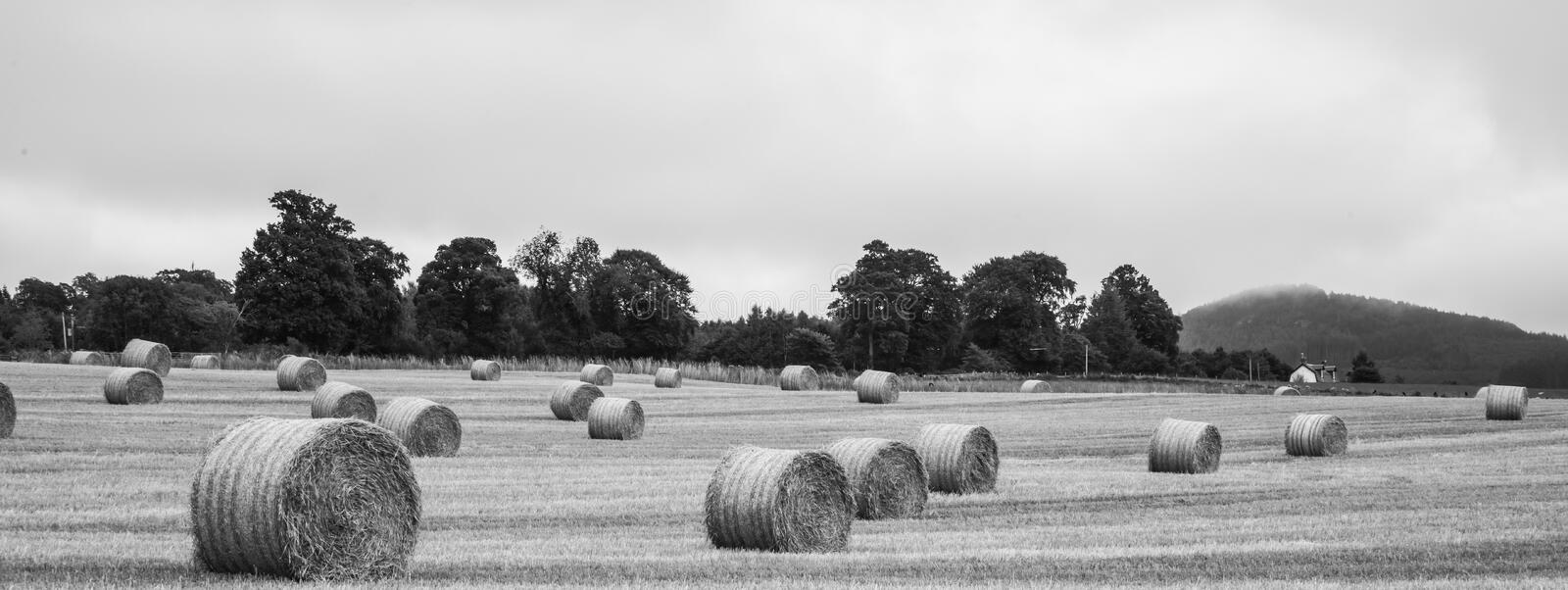 Large round straw bale on field - Scotland stock photography