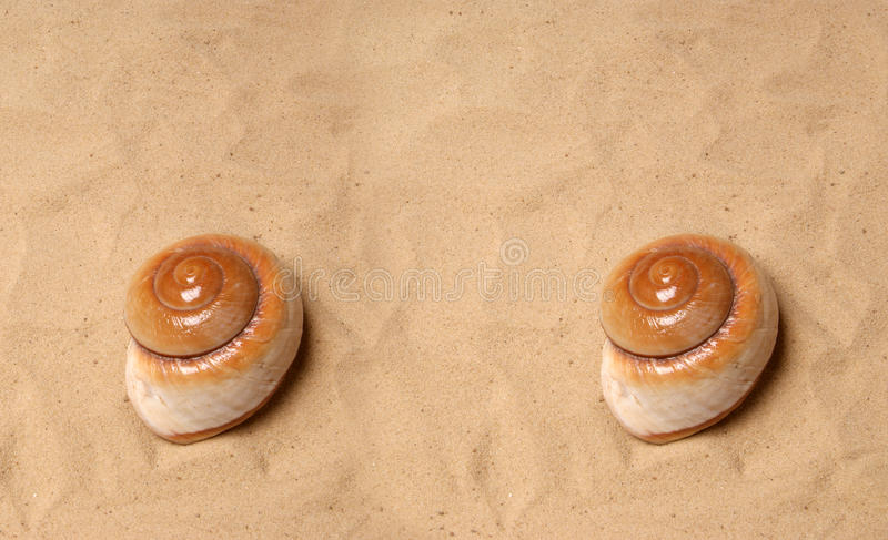 Download Large seashell on the sand stock image. Image of decoration - 28853411