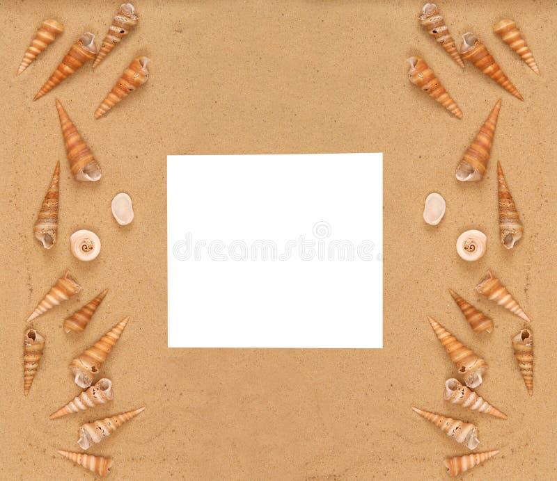 Large seashells on the sand royalty free stock image