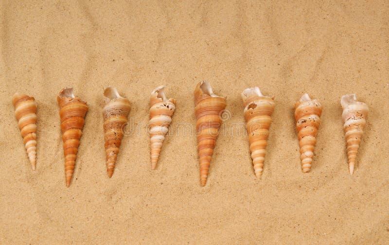 Large seashells on the sand stock photo