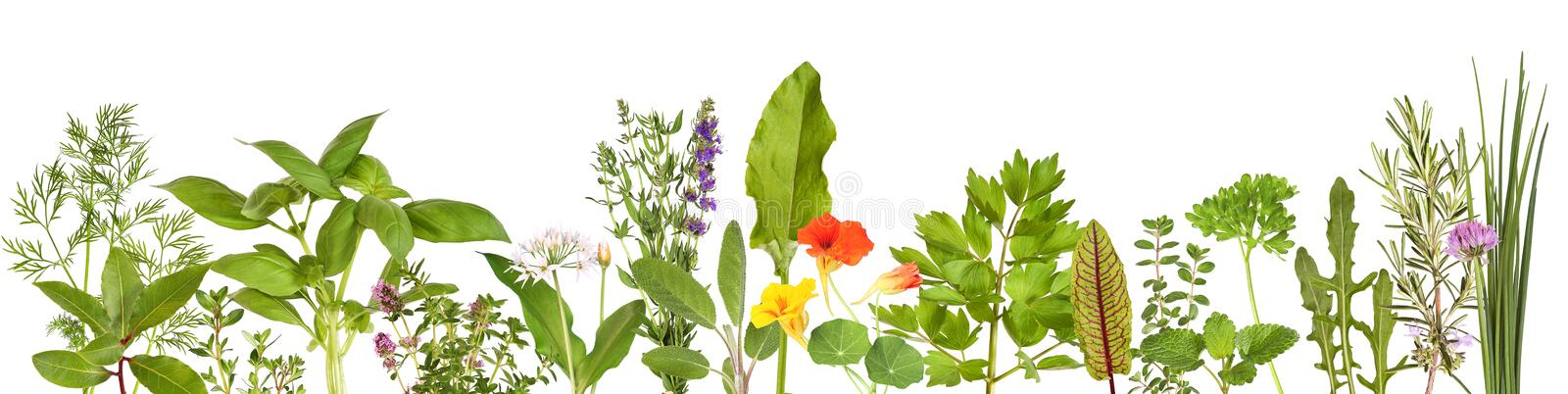 Large selection of fresh herbs stock photo