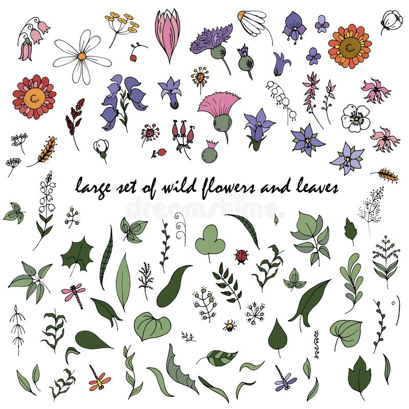 Large set of wild flowers and leaves. In Doodle style, stylized wild plants, vector illustration on white background royalty free illustration
