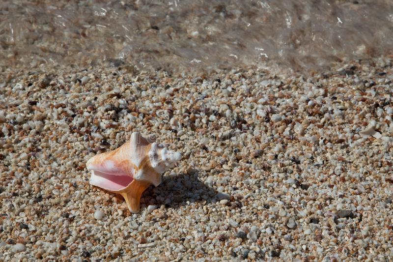 Shells on Tiny Shells with Wave and Large Conch Shell stock photography