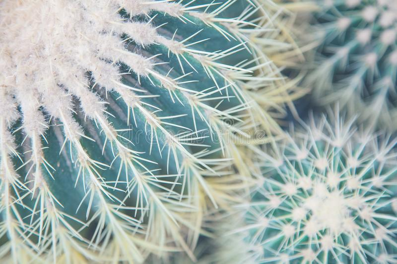 Large and small green cactus, view from above stock photography