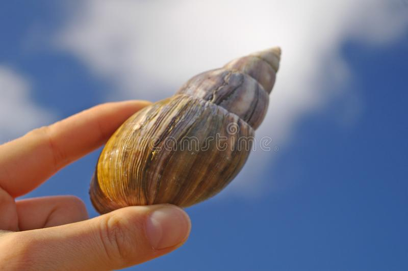 Download Large Snail In Woman's Hand Stock Photo - Image: 4081760