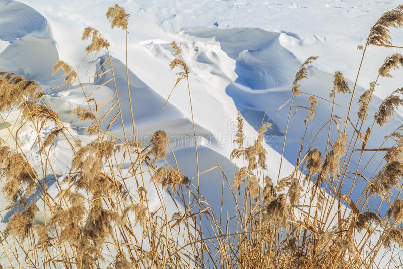 Large snow drifts and dried reeds on a winter sunny day.  stock image