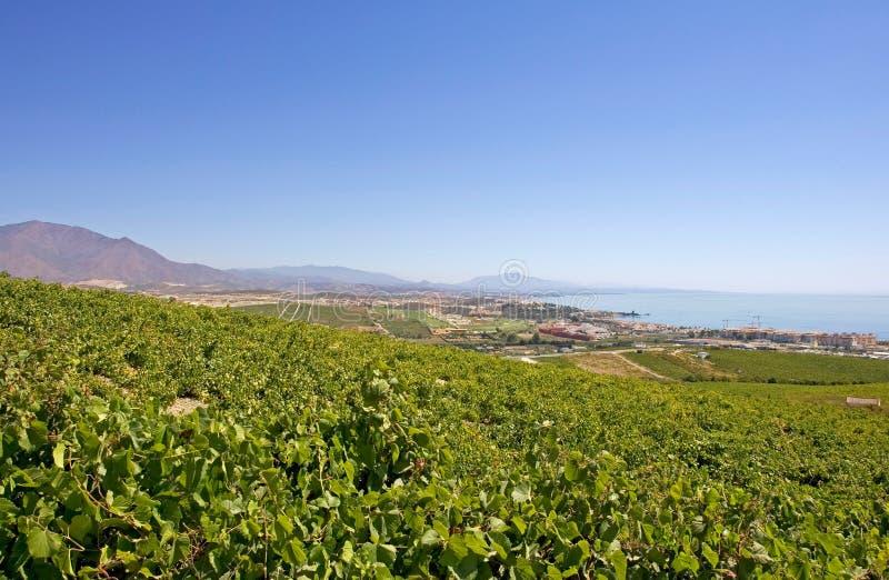 Large Spanish vineyards overlooking Duquesa Manilva through to M stock photos