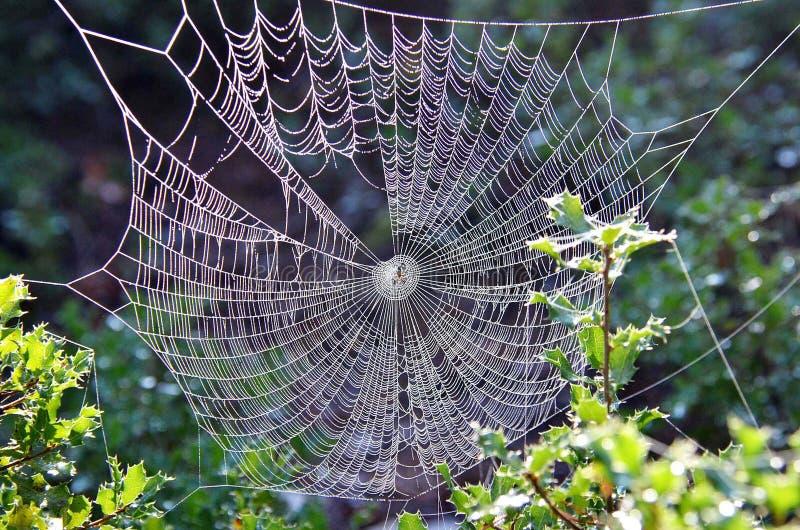 Large Spiderweb Netting Free Public Domain Cc0 Image
