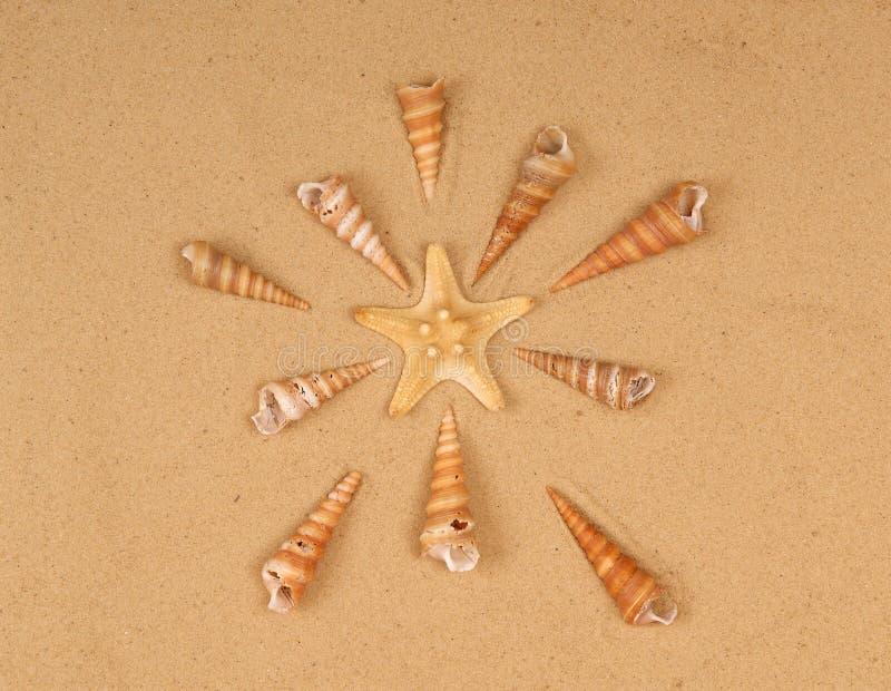 Download Large Starfish And Seashells On The Sand Stock Photo - Image: 21176948