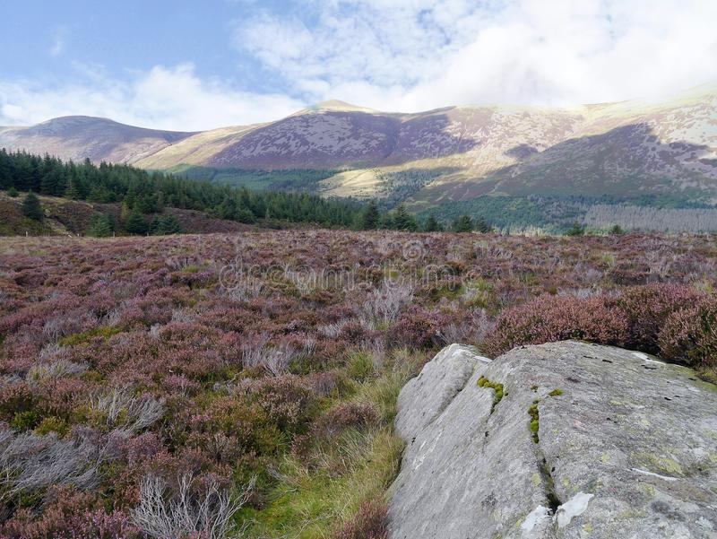 Large stone on heather plateau with Ennerdale forest further back royalty free stock photos