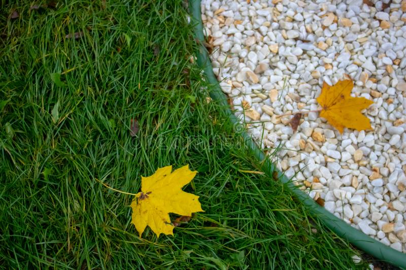 A large stone lies on the yellowed maple leaves that have fallen on the green grass in the autumn season, close-up in nature on a royalty free stock photo
